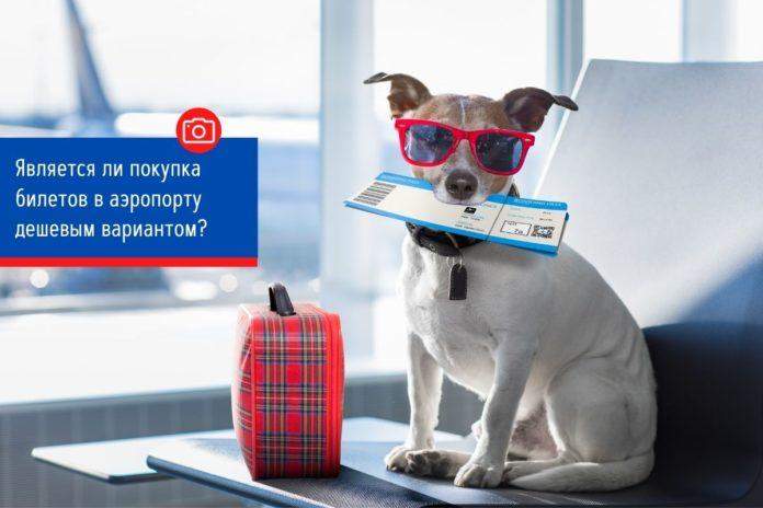 Вы можете сэкономить много времени с помощью ранней регистрации онлайн. Для этого достаточно просто зайти на сайт авиакомпании, ввести всю необходимую информацию и распечатать посадочный талон или получить его прямо на свой телефон. Отменить или изменить билет намного проще, если вы забронировали билет онлайн. Вы также можете сравнить сборы за отмену и узнать все соответствующие правила, прежде чем покупать билет в Интернете, и избежать дополнительных «внешних сборов». ИТОГ: КУПИТЬ В ИНТЕРНЕТЕ Итак, в следующий раз, когда вы подумаете: «А дешевле ли купить билет в аэропорту?» не тратьте время на дорогу только для того, чтобы разочароваться в ценах. Чтобы получить самый дешевый билет на самолет, всегда бронируйте онлайн. Даже если для этого потребуется воспользоваться телефоном на парковке аэропорта, но вам будет лучше.