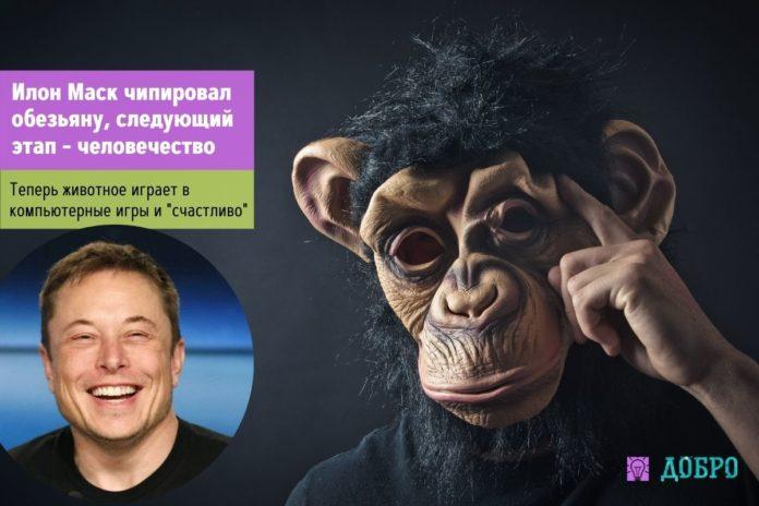 Илон Маск чипировал обезьяну